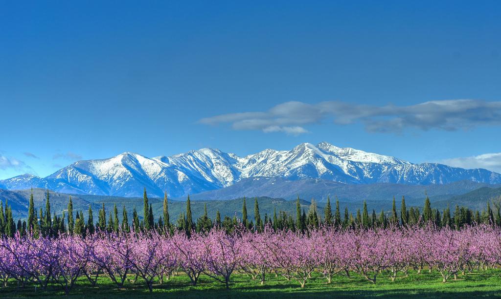 Blanc sur Rose - Couleur des Pyrénées Orientales en mars...
