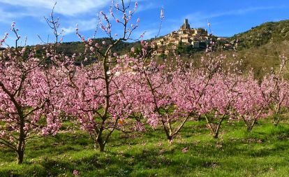 eus pyrenees peach bloom