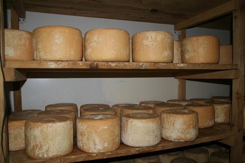 Fromage des Pyrénées Tomme