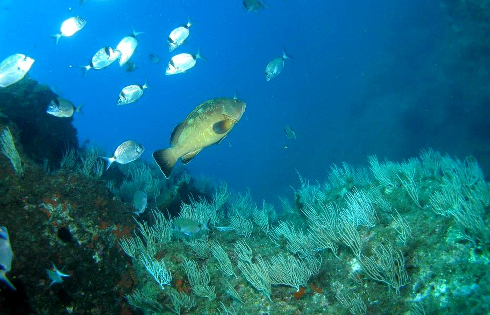 gite reserve marine Banyuls