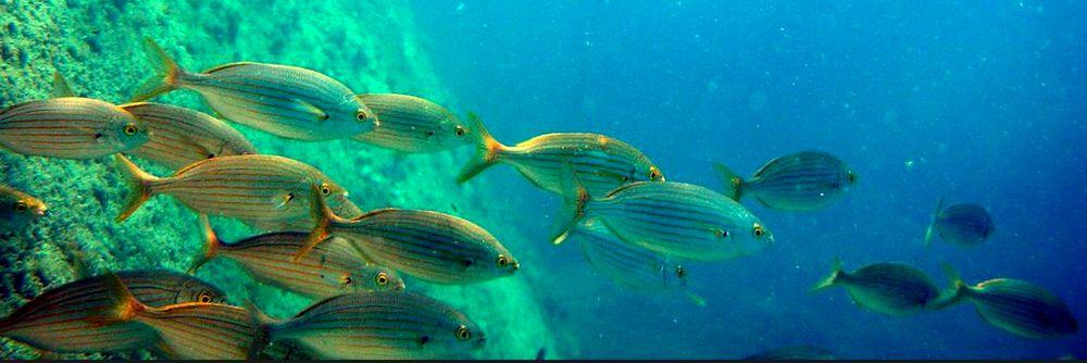 parcours plongée parc natuel marin