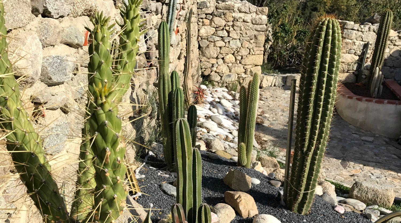 Jardin aride de Cactus greants 66