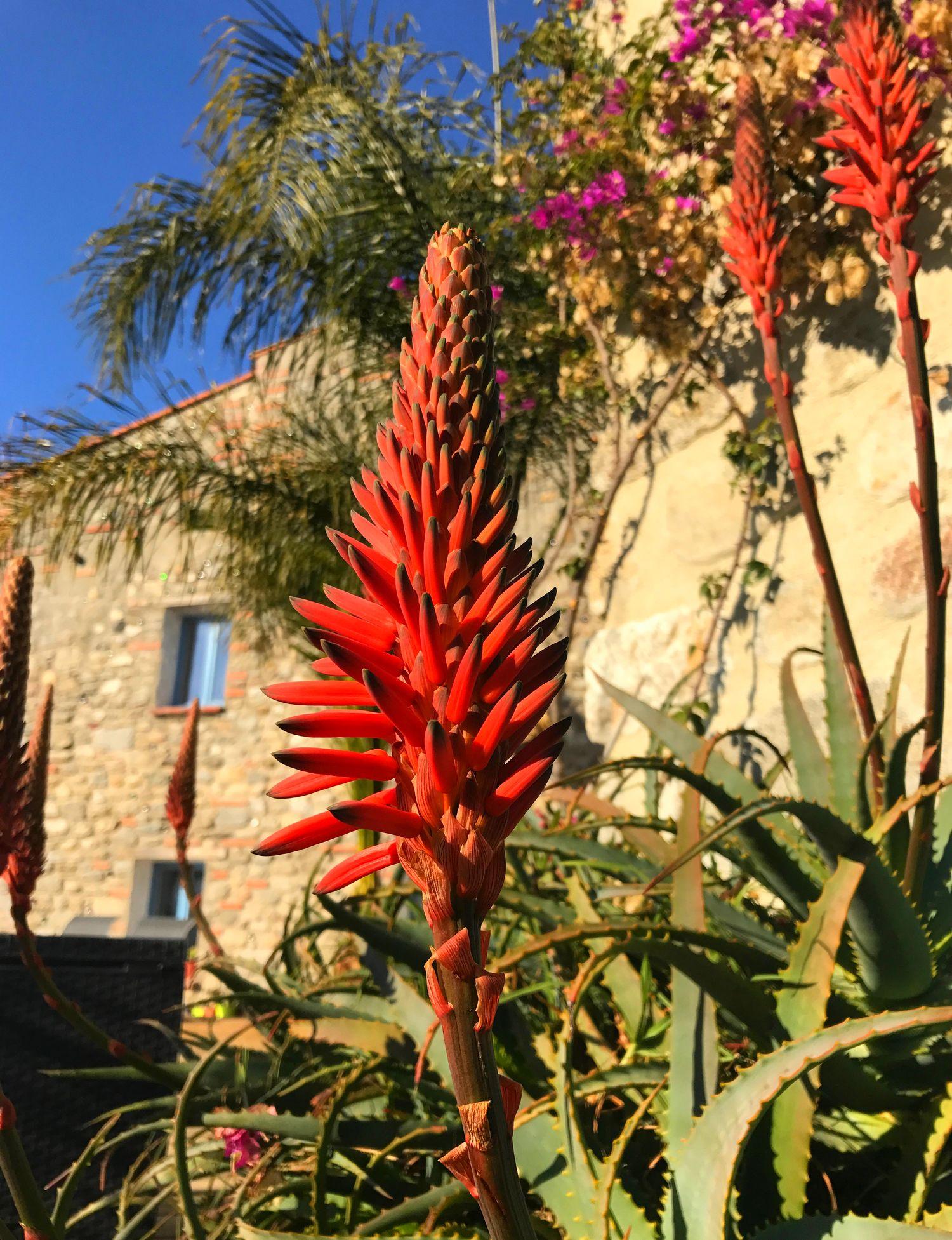 jardin de cactus à EUS 66