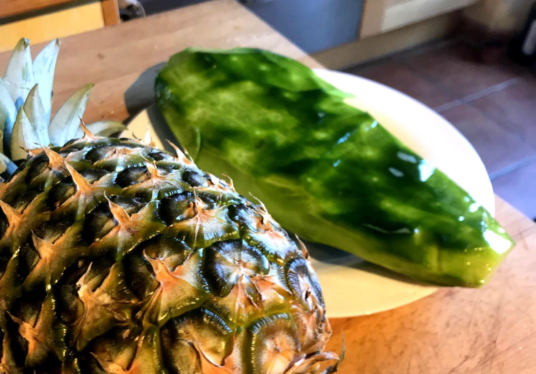 jus naturel de cactus nopal opuntia