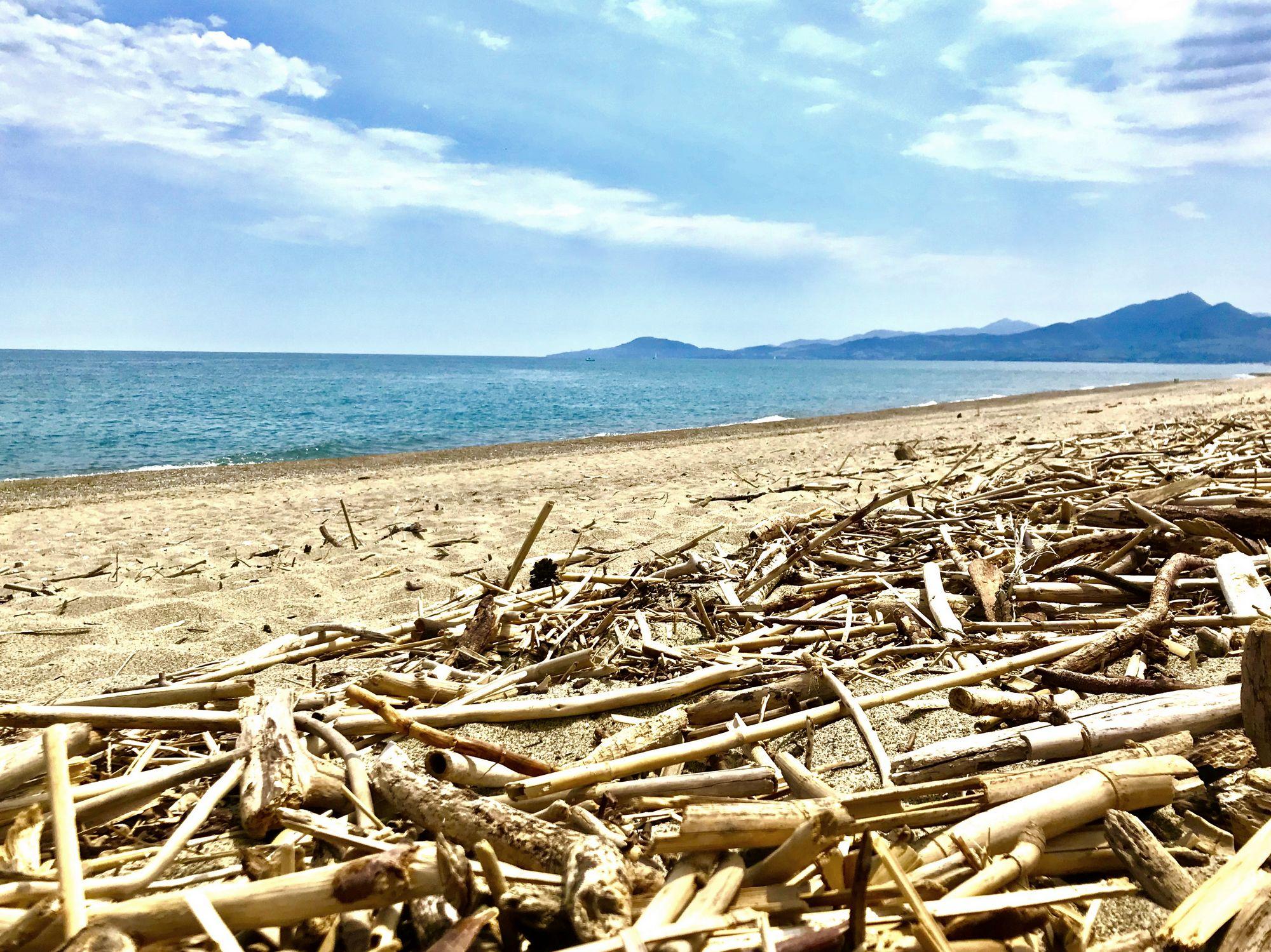 ou chercher du bois flotté plage deserte