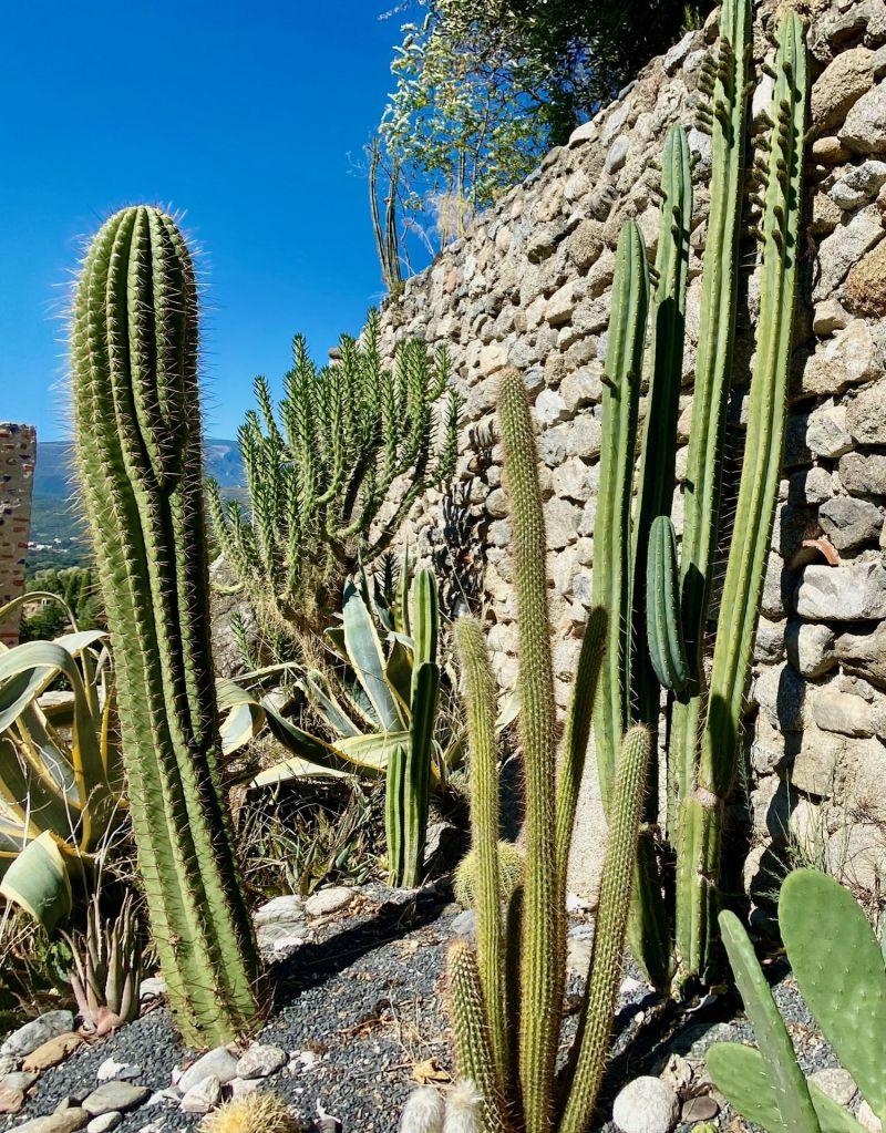 jardin botanique sec exotique cactus plantes grasses