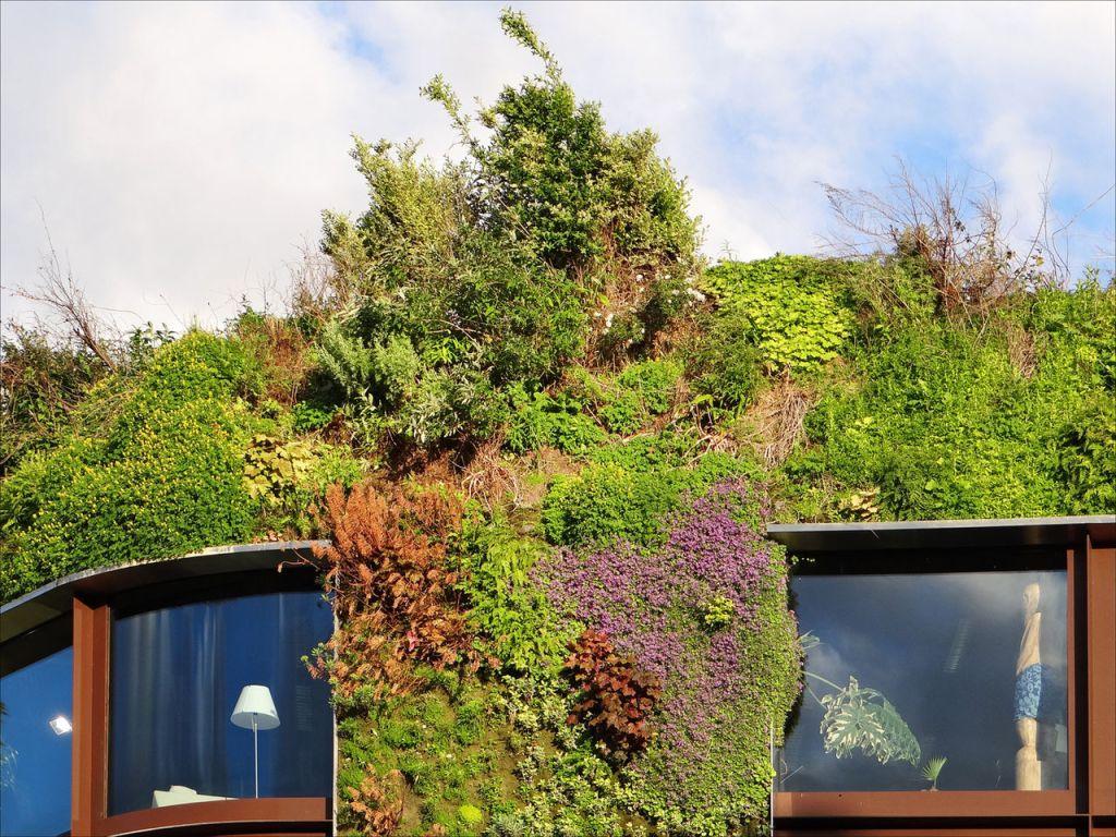 mur vegetalisé facade vegetale ecologique 66