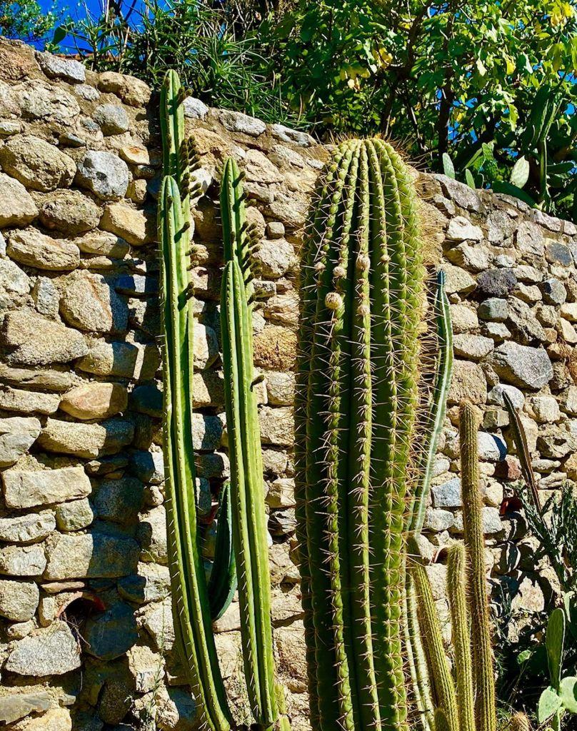 jardin de cactus cierge jardin exotique mediterraneen 66