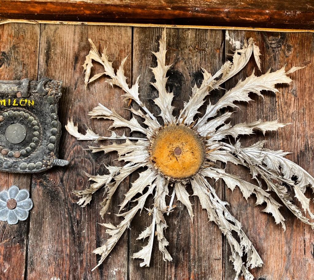 carline sechee symbole eus